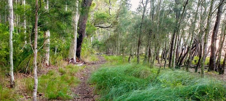 Meroo Lake walking track Trail Hiking Australia