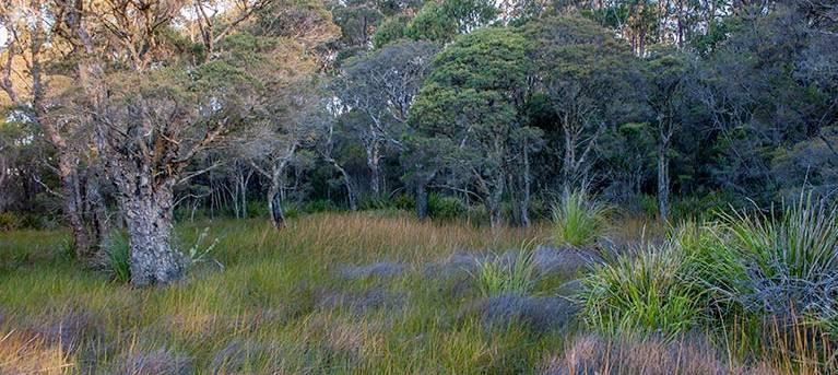 Missingham lookout track Trail Hiking Australia