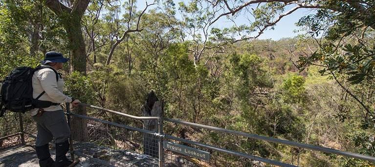 Mooney Mooney nature walk Trail Hiking Australia