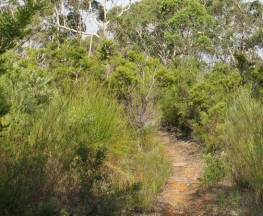 Mooray walking track Trail Hiking Australia