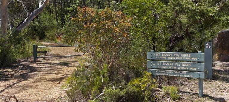 Mount Banks Summit walk Trail Hiking Australia