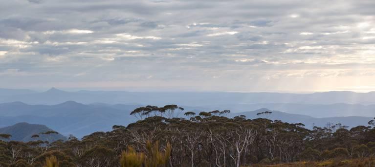 Mount Budawang trail Trail Hiking Australia
