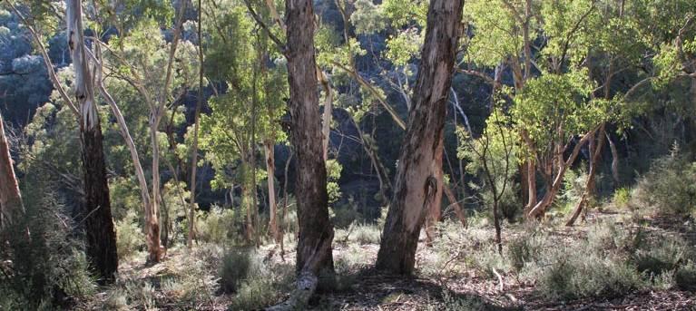 Mount Gray walking track Trail Hiking Australia