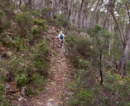 Mount Imlay Summit walking track Trail Hiking Australia