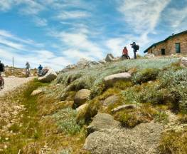 Mount Kosciuszko Summit walk Trail Hiking Australia