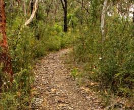 Mount Olive trail Trail Hiking Australia