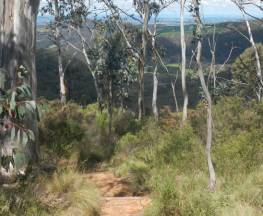 Mount Towac walk Trail Hiking Australia