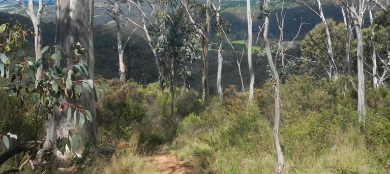 Mount Towac walk Trail Hiking Australia
