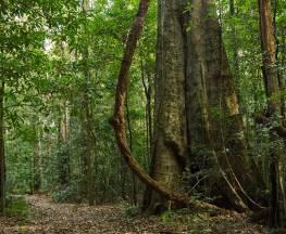 Mountain Brush circuit Trail Hiking Australia
