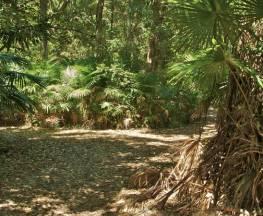 Mungo Rainforest walk Trail Hiking Australia