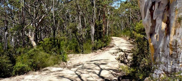 Murphys trail - Wentworth Falls to Woodford Trail Hiking Australia