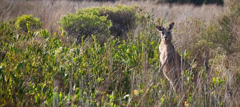 Murramarang Aboriginal Area walking track Trail Hiking Australia