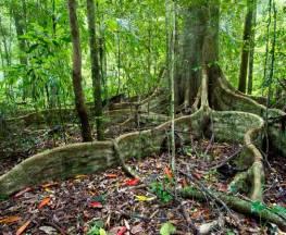 Murray Scrub walking track Trail Hiking Australia