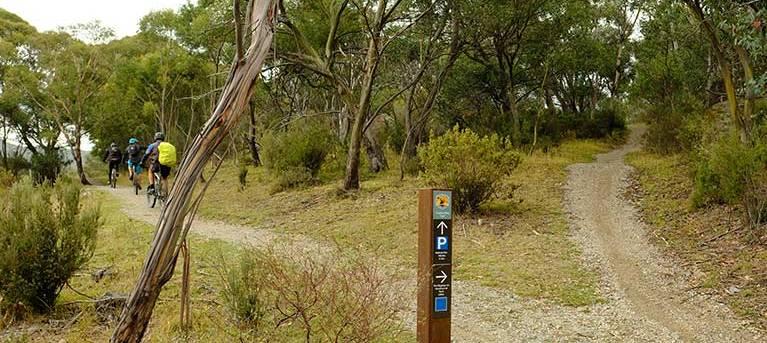 Muzzlewood track Trail Hiking Australia