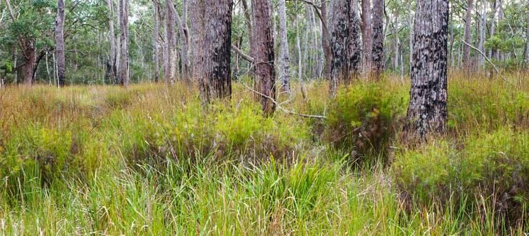 Narrawallee Inlet walking track Trail Hiking Australia