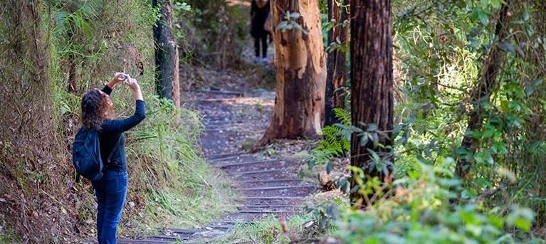 Nepean River walking track Trail Hiking Australia