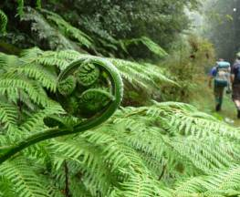 New England Wilderness walk Trail Hiking Australia