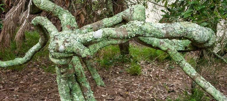 Nuggan Point walking track Trail Hiking Australia