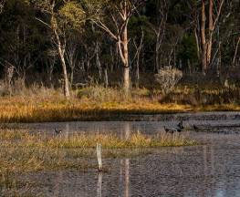 Nunnock Swamp and Grasslands walking tracks Trail Hiking Australia
