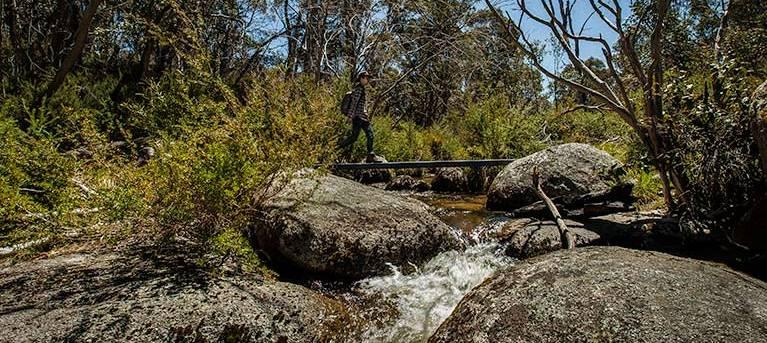 Pallaibo walking track Trail Hiking Australia