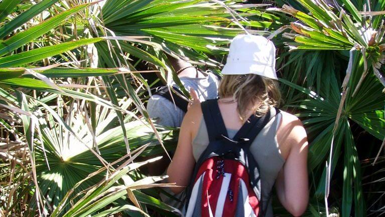 Palm Jungle loop track Trail Hiking Australia