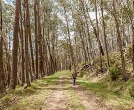 Patons Hut walking track Trail Hiking Australia