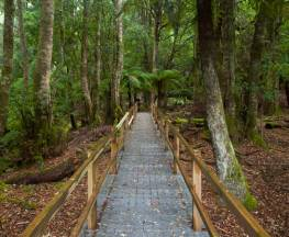 Penance Grove walking track Trail Hiking Australia