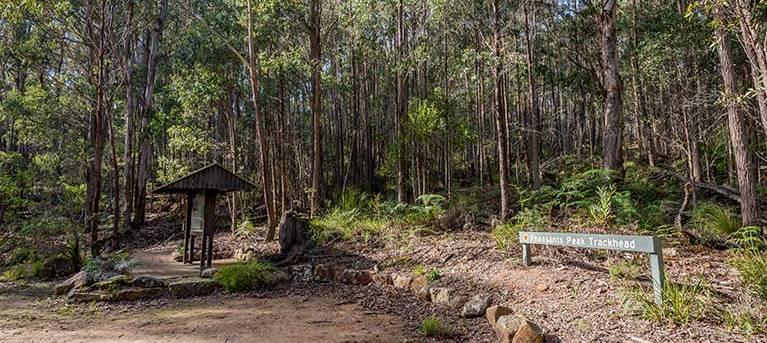 Pheasants Peak walking track Trail Hiking Australia