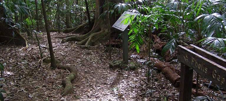 Pholis Gap walking track Trail Hiking Australia