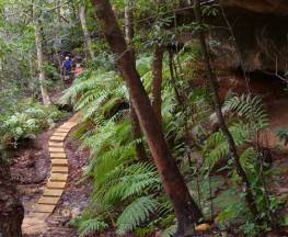 Piles Creek loop Trail Hiking Australia