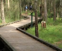 Place of Winds interpretive trail Trail Hiking Australia