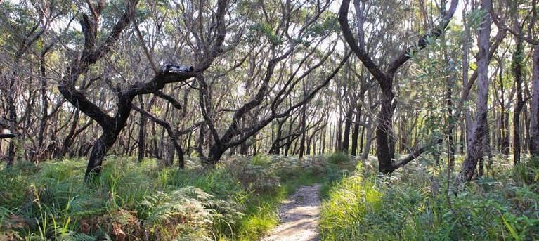 Pot Holes walking track Trail Hiking Australia