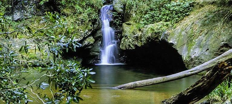 Potaroo Falls walk Trail Hiking Australia