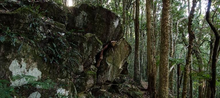 Rainforest loop Trail Hiking Australia