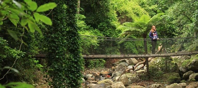 Rainforest loop walk Trail Hiking Australia