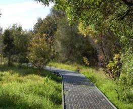 Rainforest walk to Riverside Park Trail Hiking Australia