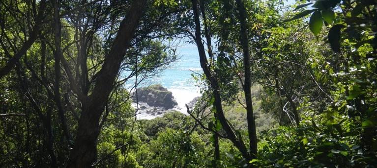 Rainforest walking track Trail Hiking Australia