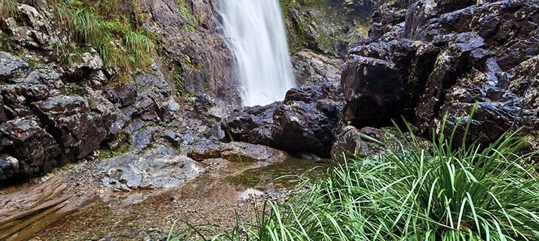 Red Cedar Falls walking track Trail Hiking Australia