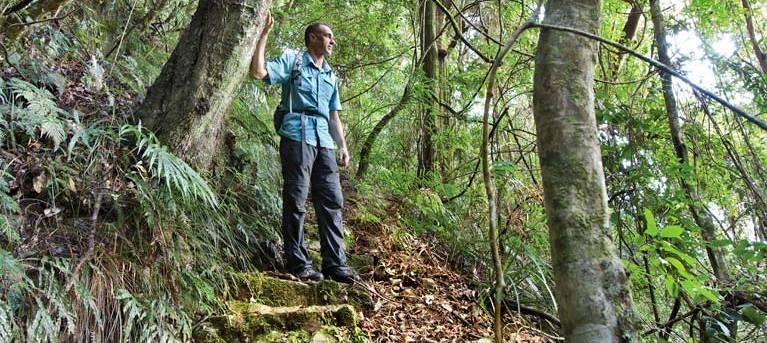 Rosewood Creek walking track Trail Hiking Australia