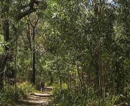 Sand track walk (south) Trail Hiking Australia