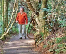 Satinbird stroll Trail Hiking Australia