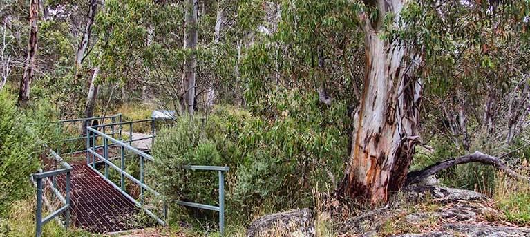 Sawpit walking track Trail Hiking Australia