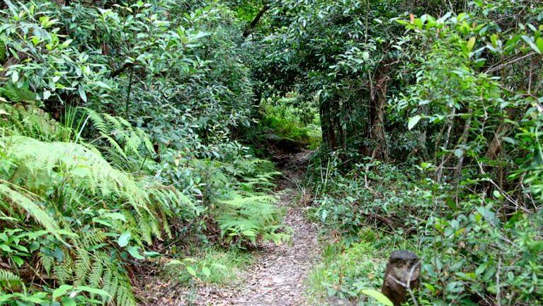 Seaforth Oval to Natural Bridge track Trail Hiking Australia