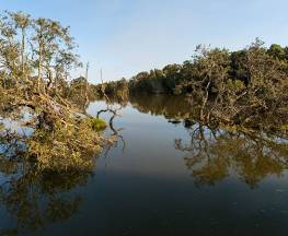 Seaham Swamp walk Trail Hiking Australia