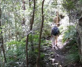 She-Oak crossing walk Trail Hiking Australia