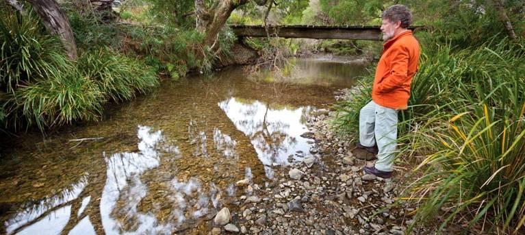 Slingsbys trail and Syndicate Ridge track Trail Hiking Australia