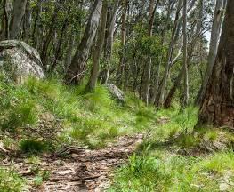 Spring Glade walking track Trail Hiking Australia