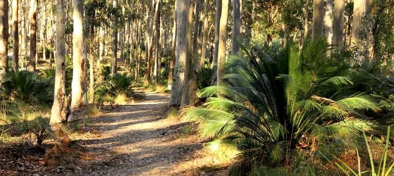 Square Head track 2 Trail Hiking Australia