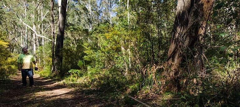 Starlights trail Trail Hiking Australia