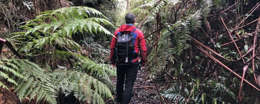 Starling Gap Ada Tree Circuit Trail Hiking Australia